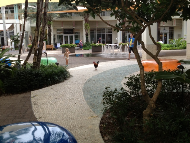 Free range chickens everywhere including shopping malls - RBuchanan photo