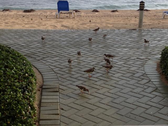 Birdies at Reef Resort East End - RBuchanan photo