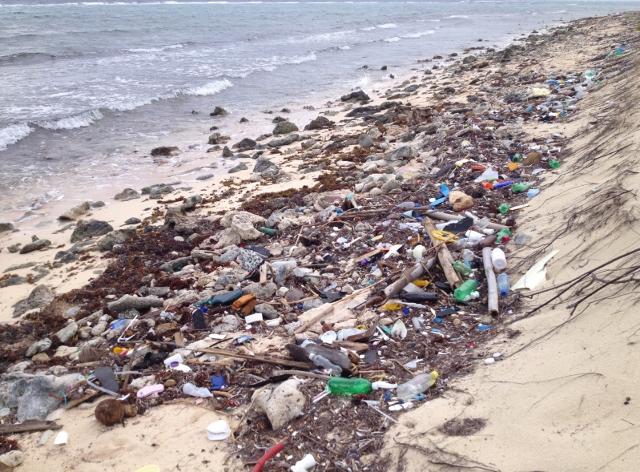 Flotsam on Cayman beach - RBuchanan photo