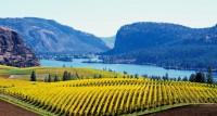 BC Wine Expert John Schreiner