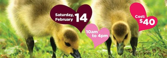 Romance is in the air this Valentine's Day at VanDusen Botanical Garden and select Park Board facilities