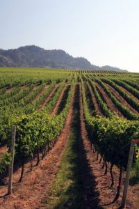 Osoyoos Vineyards. Photo credit Destination Osoyoos