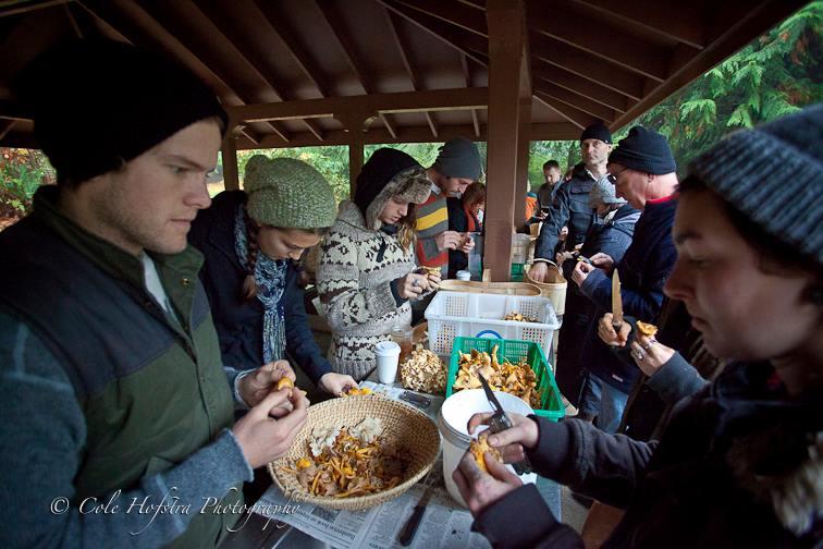 mushroom hunt 1
