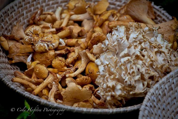 mushroom hunt 3