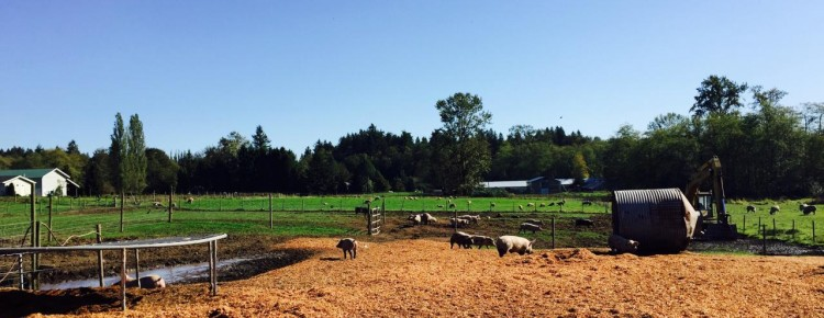 Farm to Table in the Fraser Valley