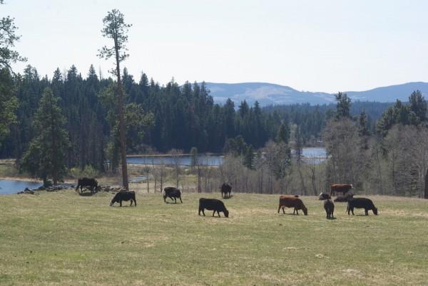 Kane Ranch[1]
