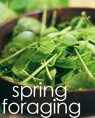 castro spring foraging