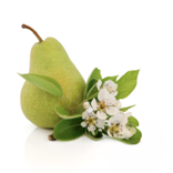 tulalip-pear