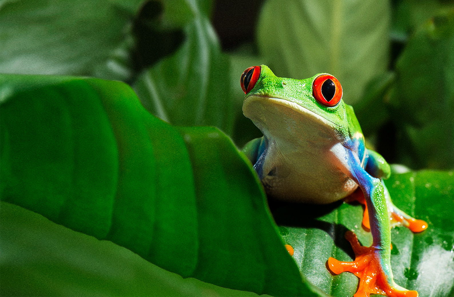 HOP TO VANCOUVER AQUARIUM THIS EASTER FOR AN EGG-UCATIONAL SCAVENGER HUNT