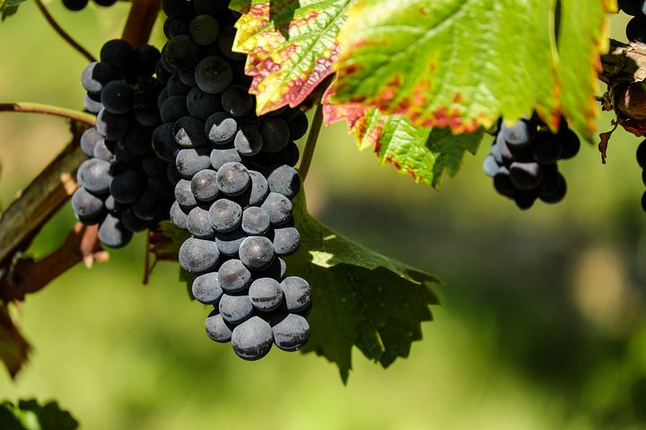 BC Pinot Noir Celebration Brings 34 Top Pinot Producers Together  With Five of Western Canada's Best Chefs