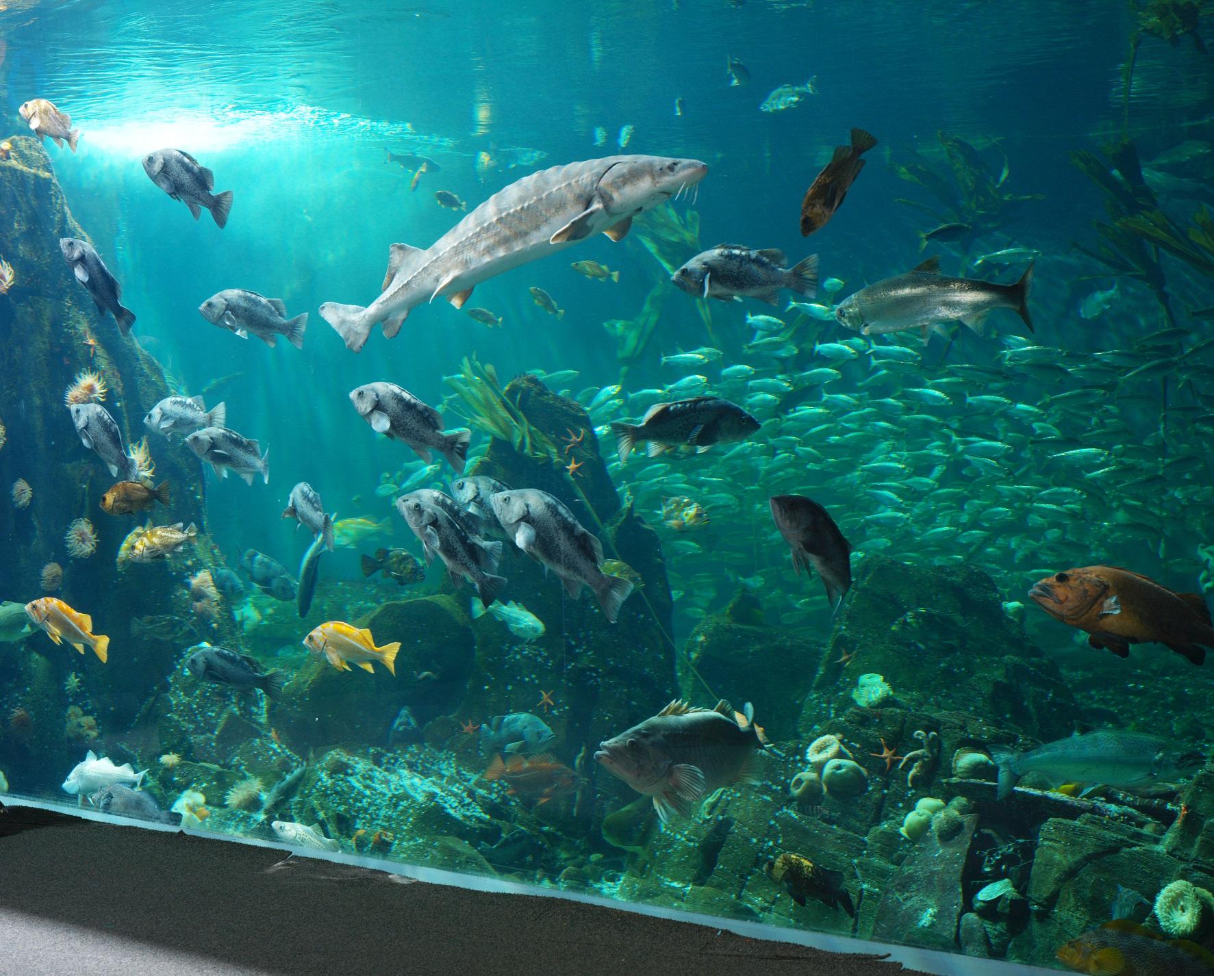 Celebrate World Oceans Day At Vancouver Aquarium On Thursday June 8 My Van City