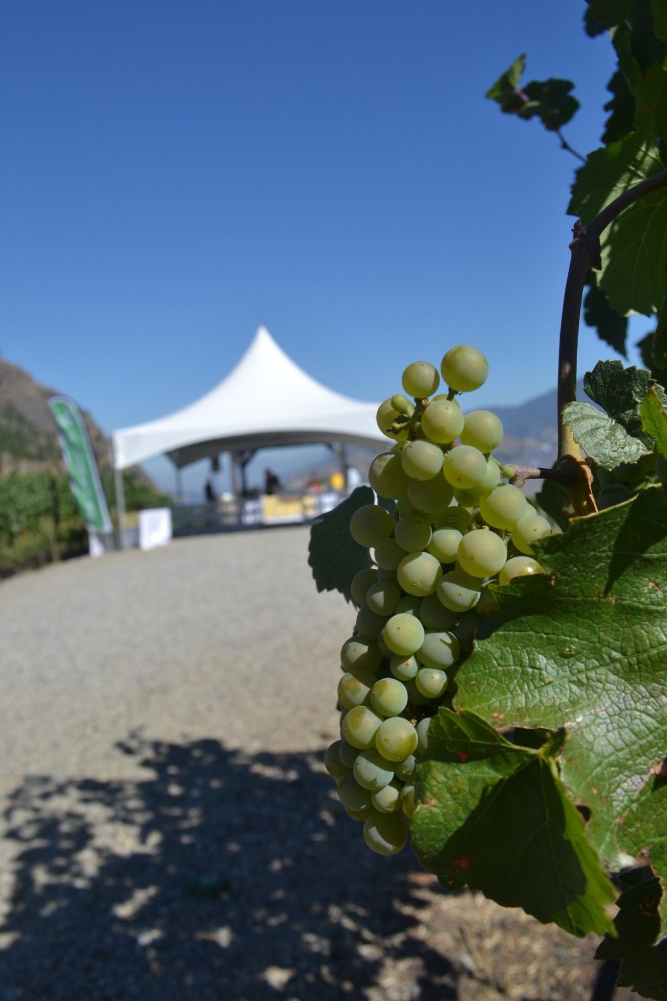 BC Wines Set to Shine Alongside Celebrity Chefs at Chef Meets BC Grape Taste of the Okanagan June 23
