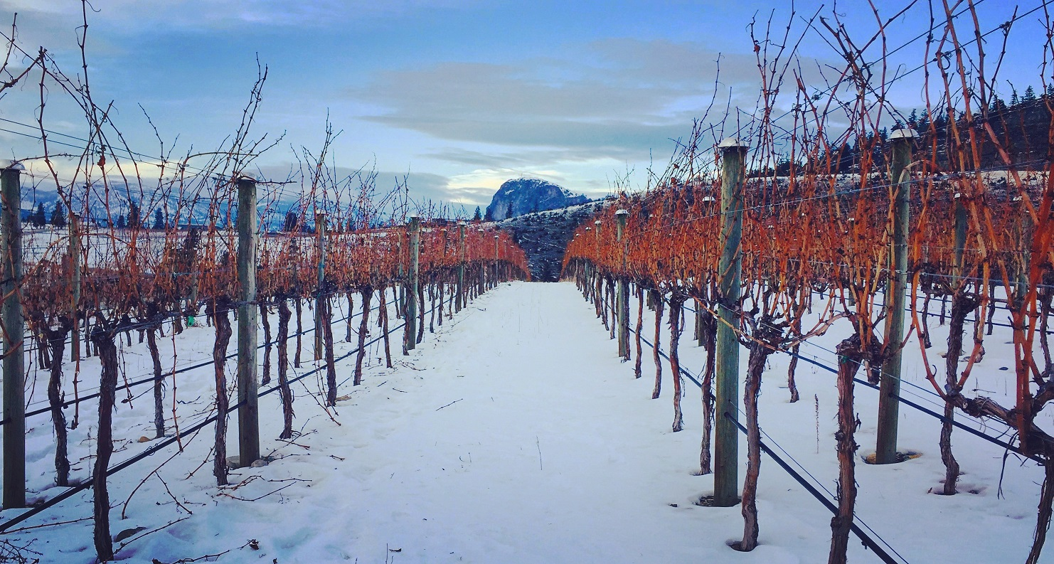 Our #FavouriteThings Holiday Gift Suggestions from Noble Ridge Vineyards & Winery