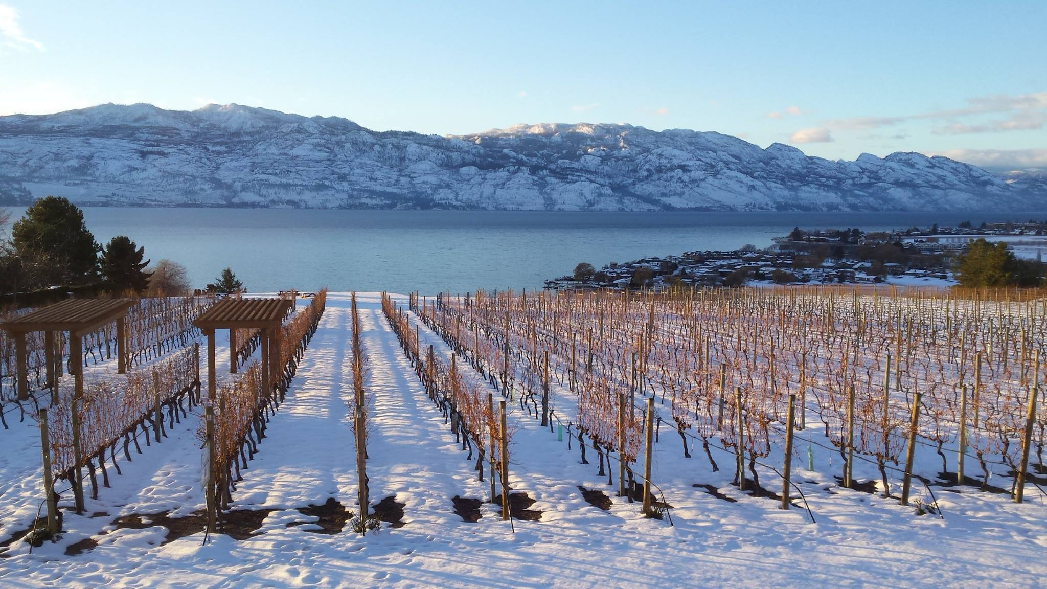 Our #FavouriteThings Holiday Gift Suggestions – Quails' Gate Winery
