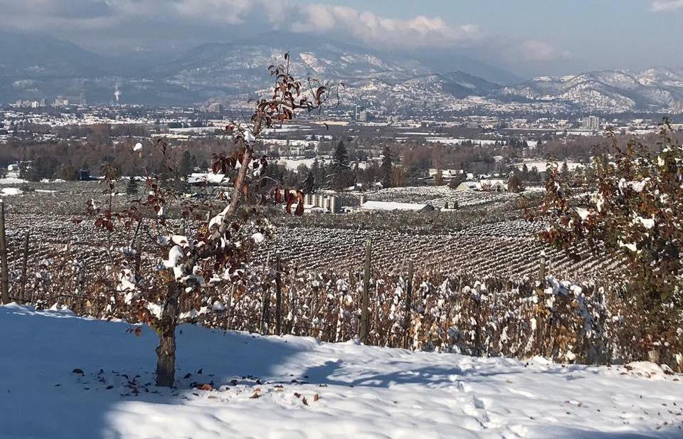 #FavouriteThings Holiday Gift Suggestions – The View Winery