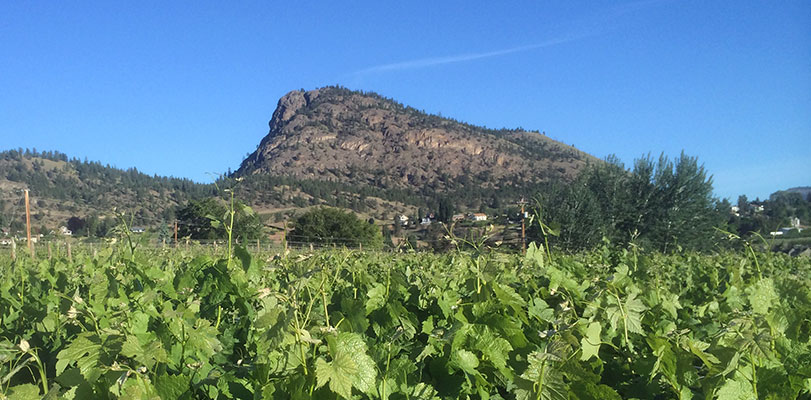 Giant Head Winery