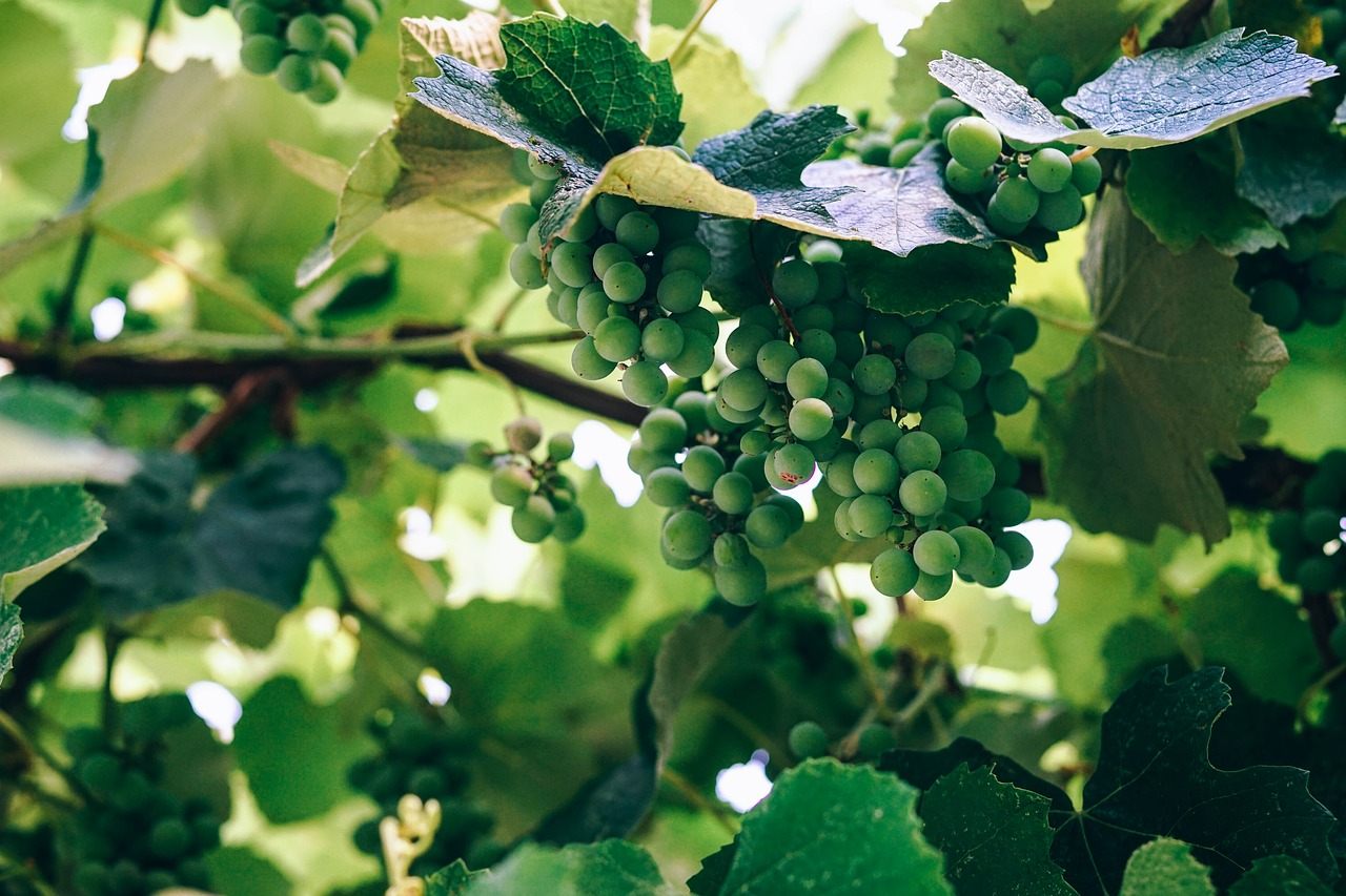 BC Wine Industry celebrates the success of BC Wine Month with BC Wine sales at an all-time high