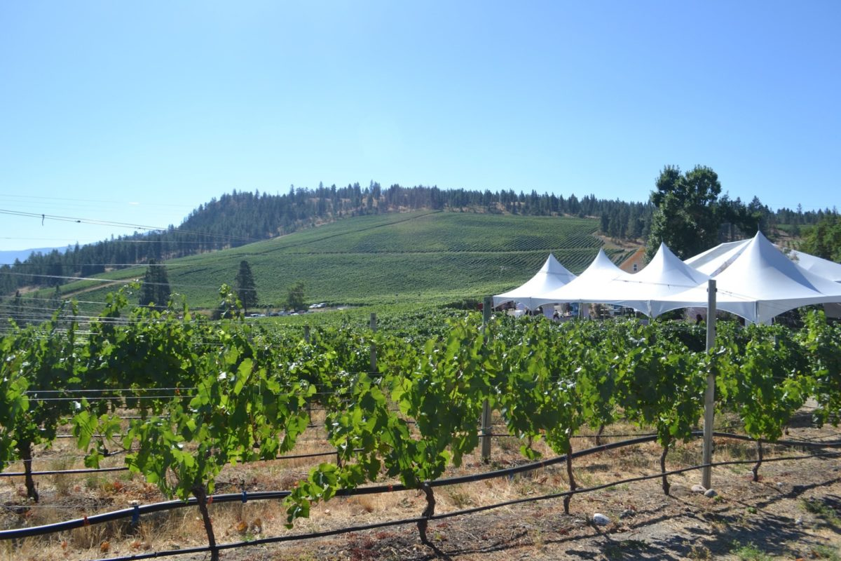 ON THE ROAD with Quails' Gate at Chef Meets BC Grape Taste of the Okanagan June 23