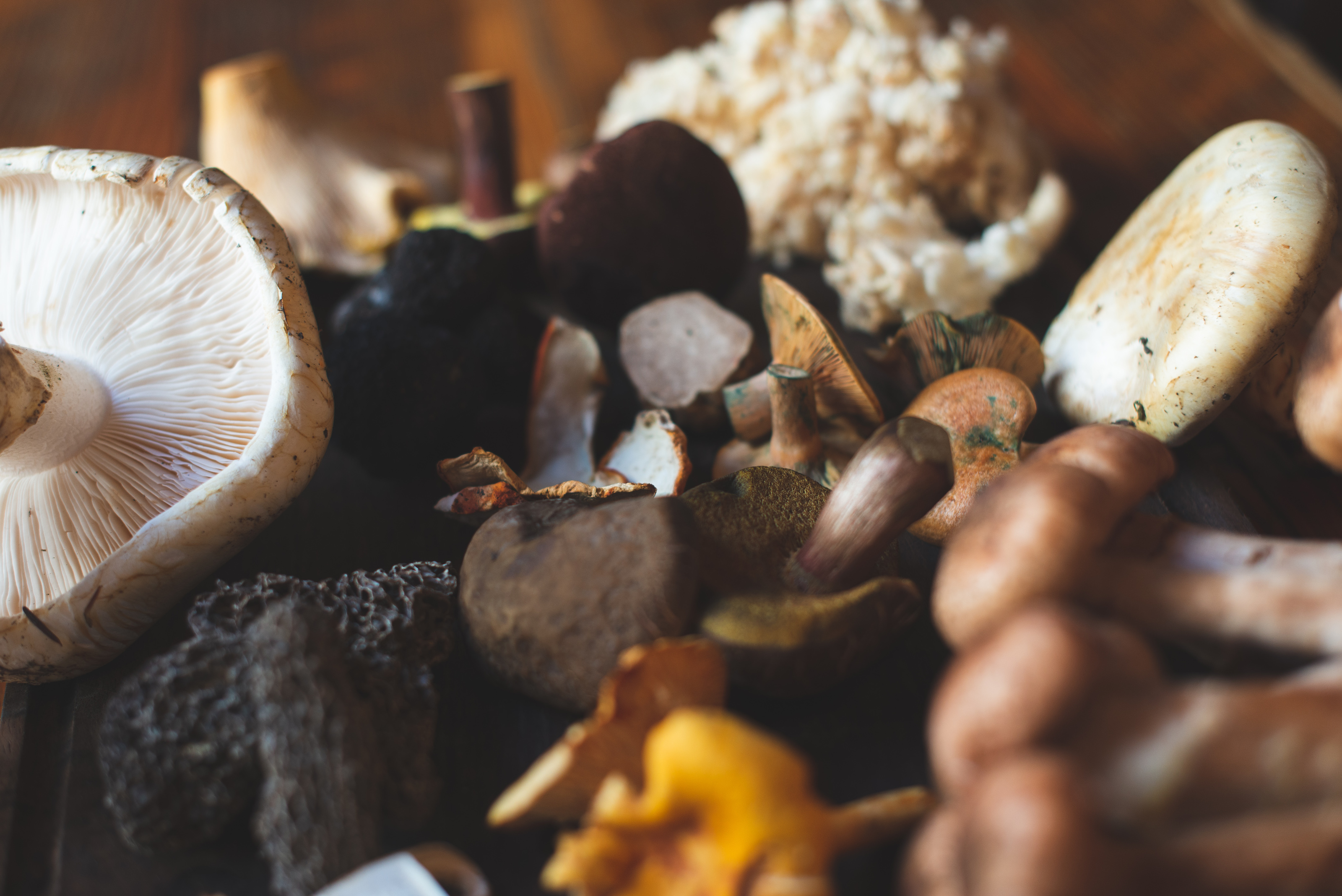 Wildebeest Unveils Limited-Edition Fall Game and Mushroom Menu this November