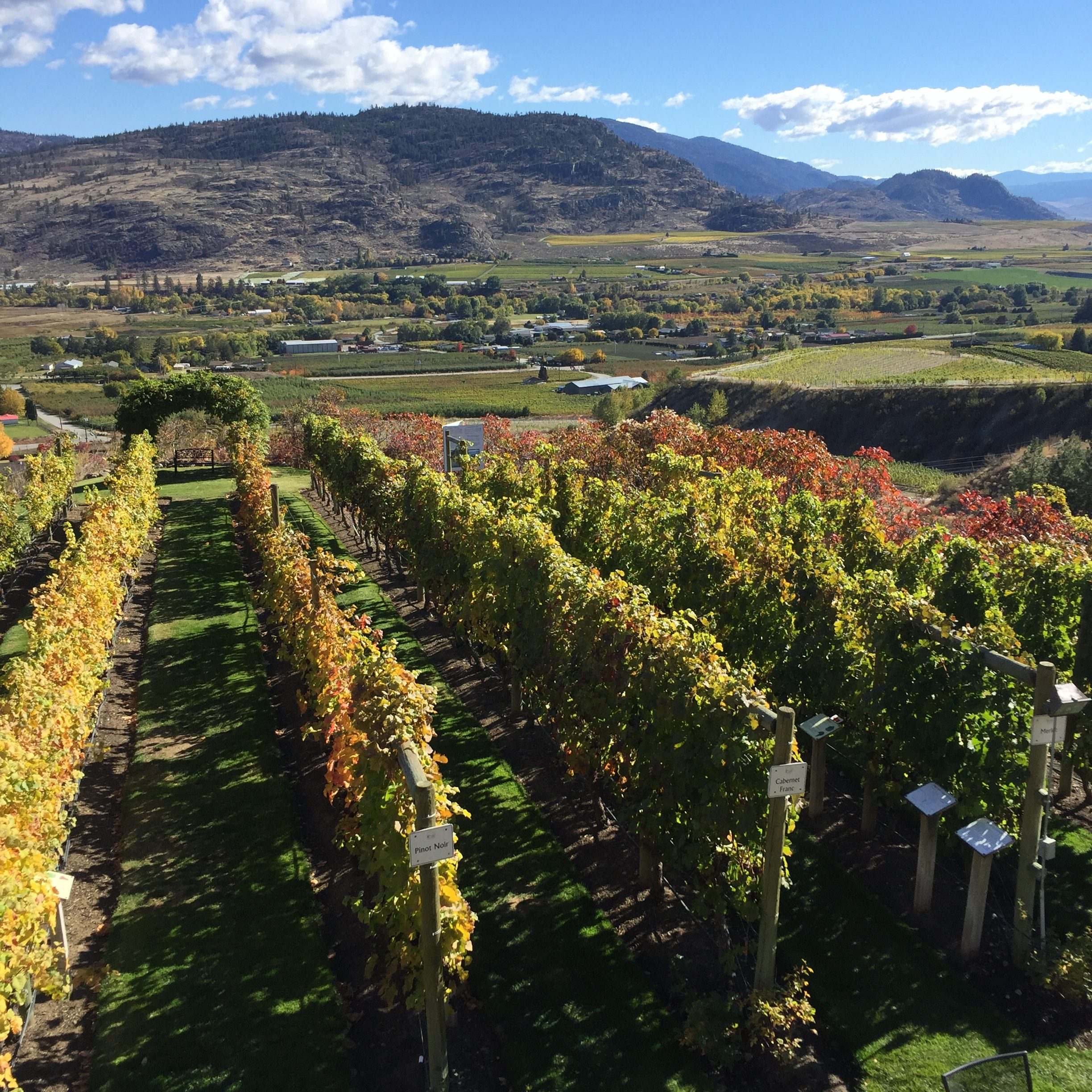 Rediscovering Favourite Wines – Tinhorn Creek Vineyards