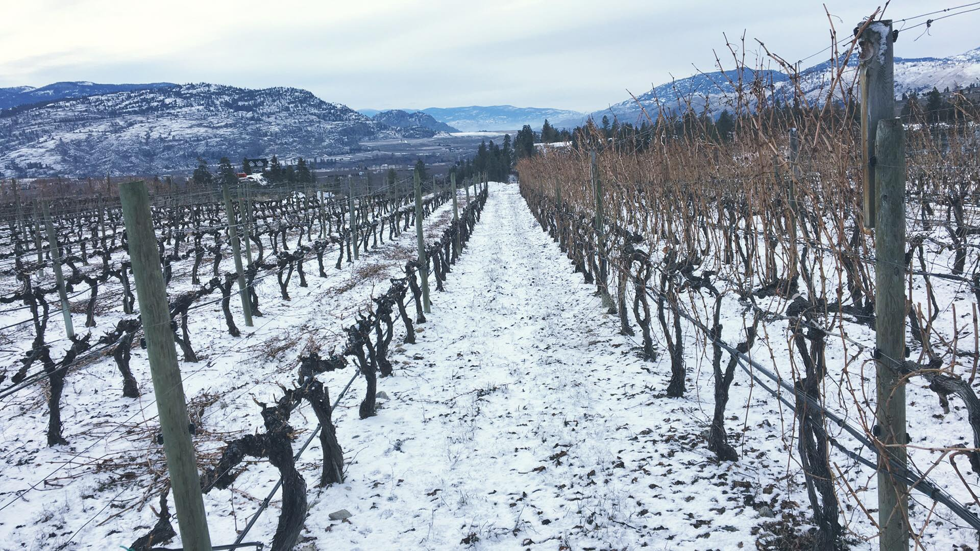 #FavouriteThings Holiday Gift Suggestions – Fairview Cellars