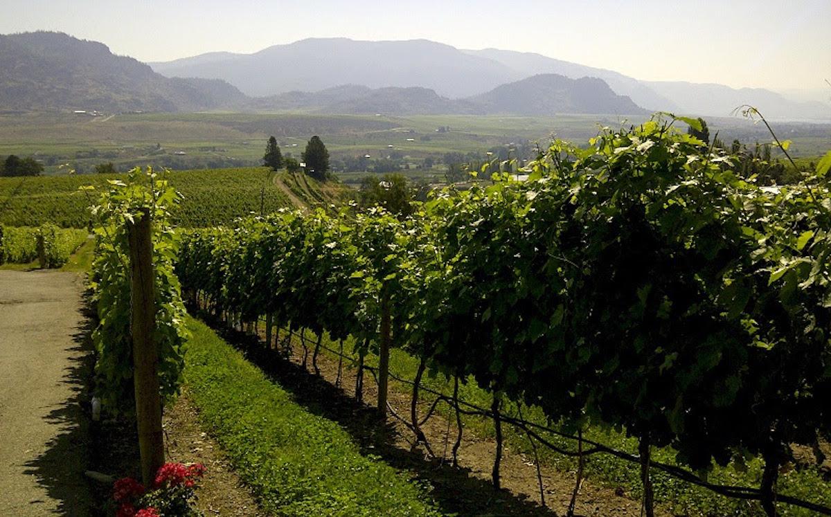 Winemaker Dinner at Provence Marinaside showcases Road 13 Vineyards