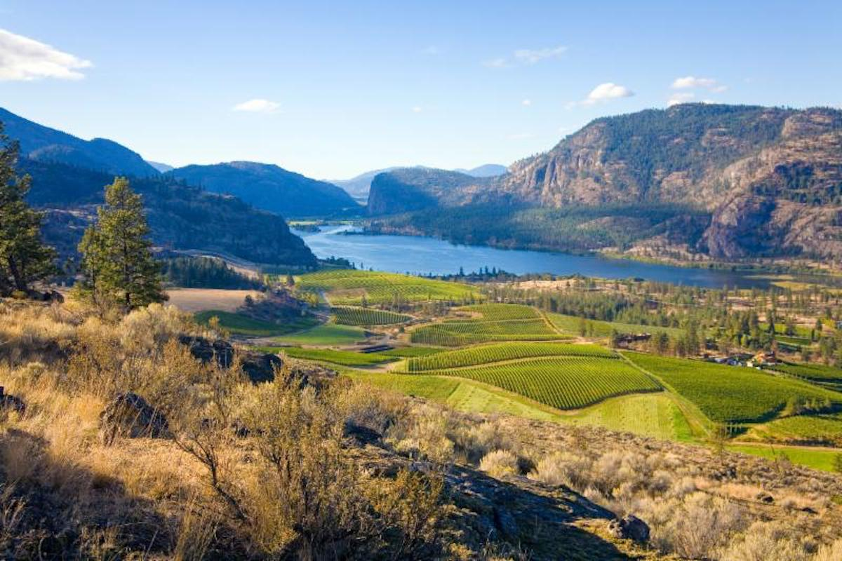 The BC Wine Institute Launches WineBC2030 BC Wine Industry Long-Term Strategic Plan