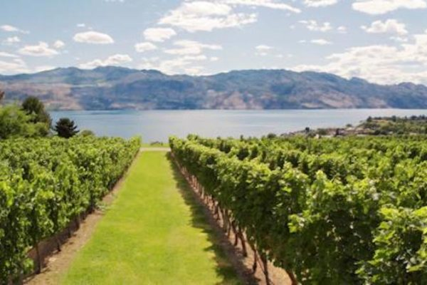 Quails' Gate Winery August News & Events/BC Pinot Noir Celebration August 17