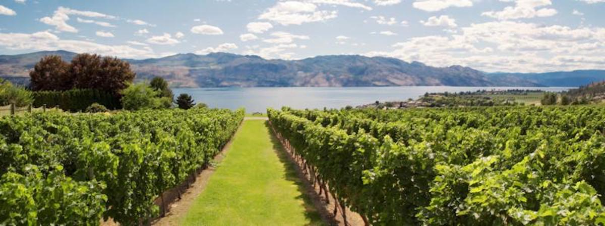 Cheers to Chardonnay Day with Free Shipping – Quails' Gate