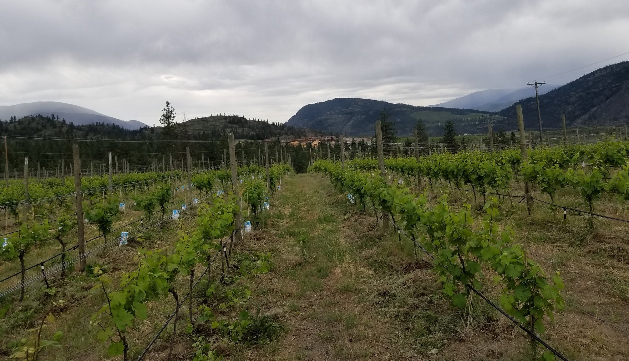 The Anticipated 2018 Synchromesh Riesling(s) Release