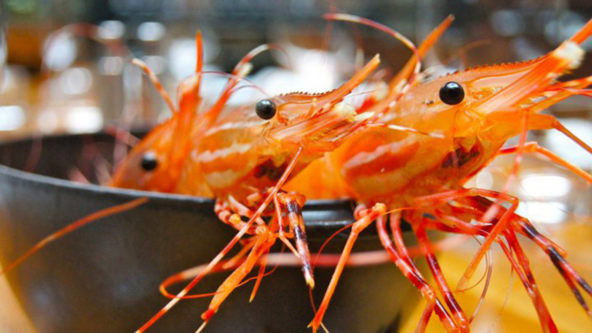 Ready, Set, Go to YEW seafood + bar for a Local Spot Prawn Boil