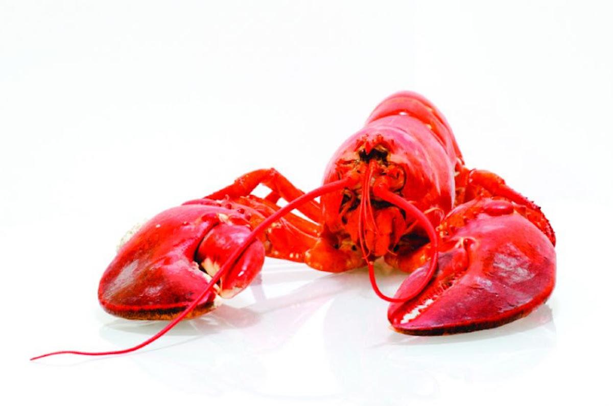 Lobster & Bubbly – Lobster Boil at Provence Marinaside – July 15