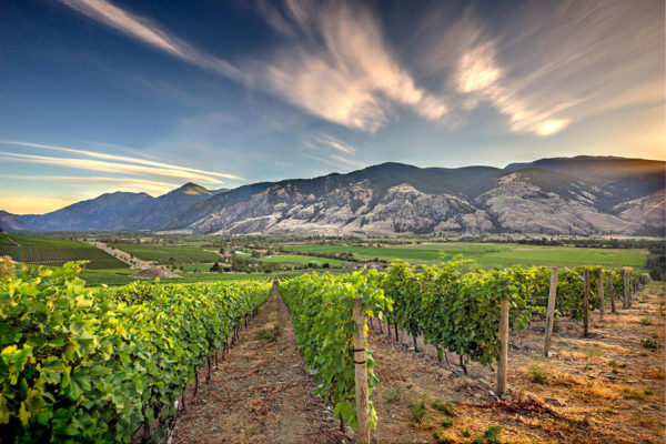 Wines for the Wine Enthusiast, Collector or Connoisseur Vanessa Vineyard