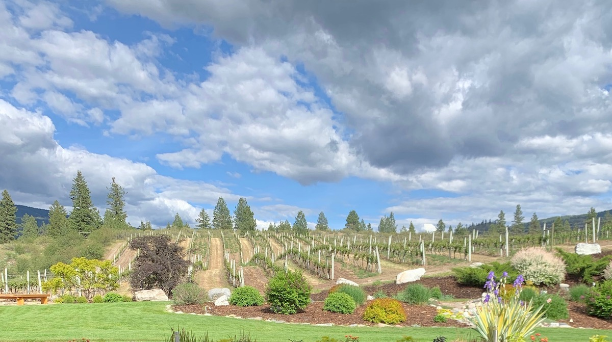 A visit to Meyer Family Vineyards – taste the wine, enjoy the atmosphere