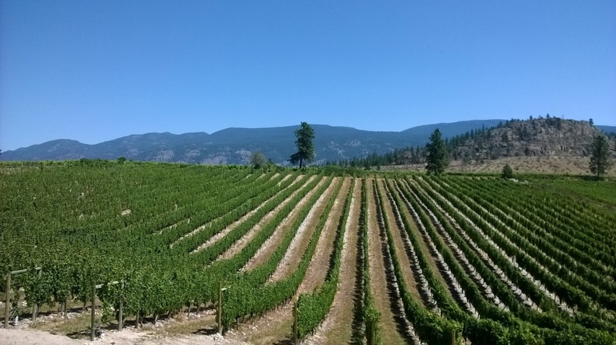 It's Always Wine Time with Wild Goose Vineyards