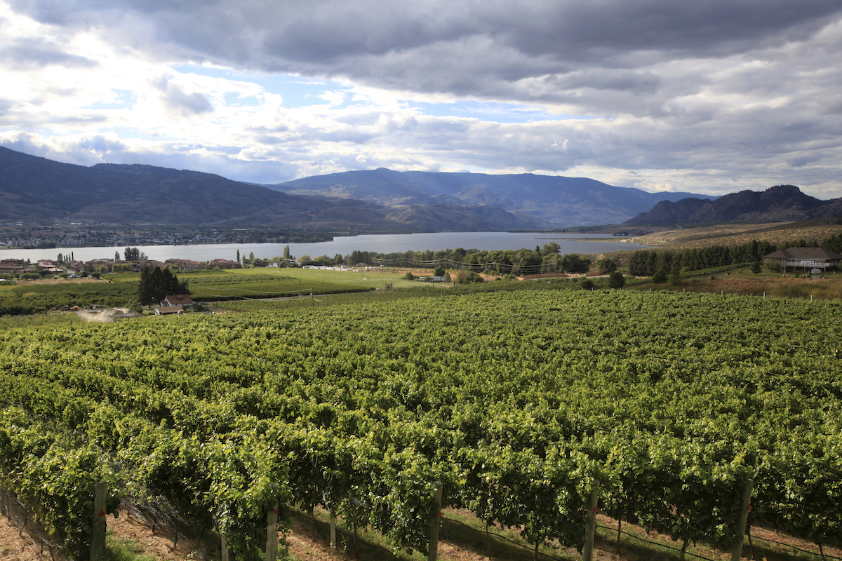 Moon Curser Vineyards Named Best Performing Small Winery at the 2019 Winealign National Wine Awards Of Canada