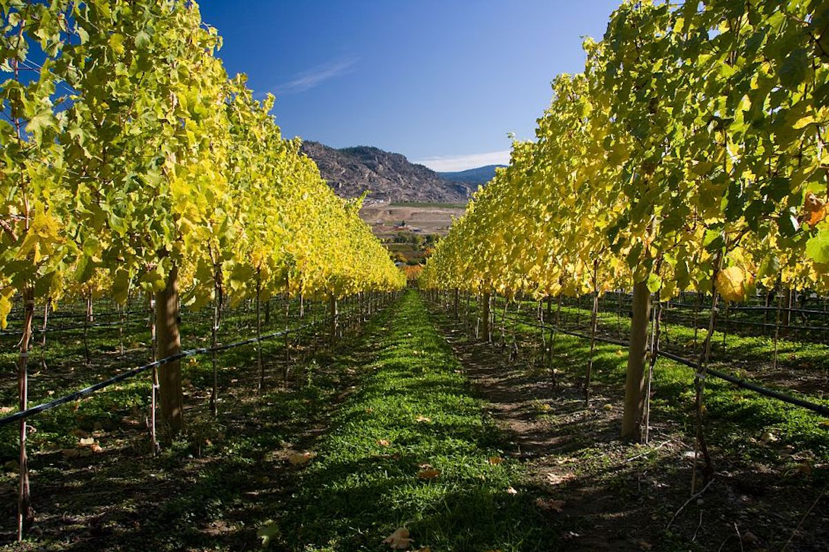 Follow the Golden Mile to Road 13 Estate Vineyards