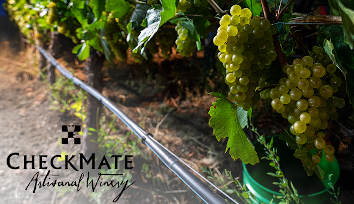 Join us in celebrating harvest with these 93++ point top rated limited availability wines
