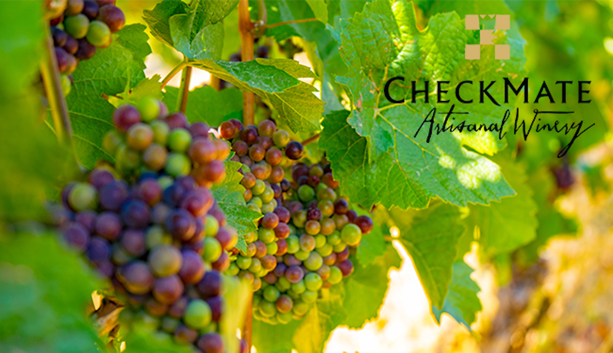 A look ahead at CheckMate's 2019 Vintage + Last Chance Wines