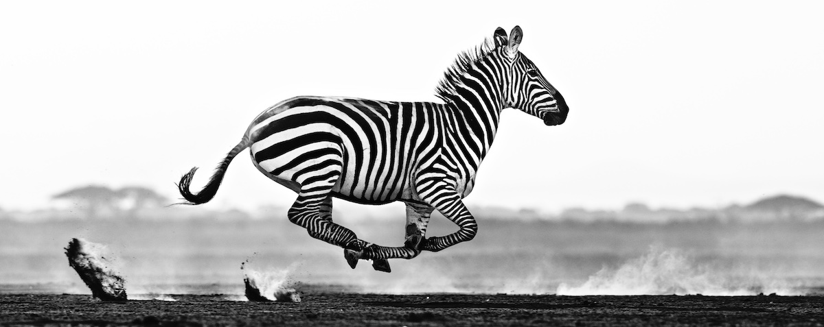 David Yarrow Exhibition coming to Vancouver