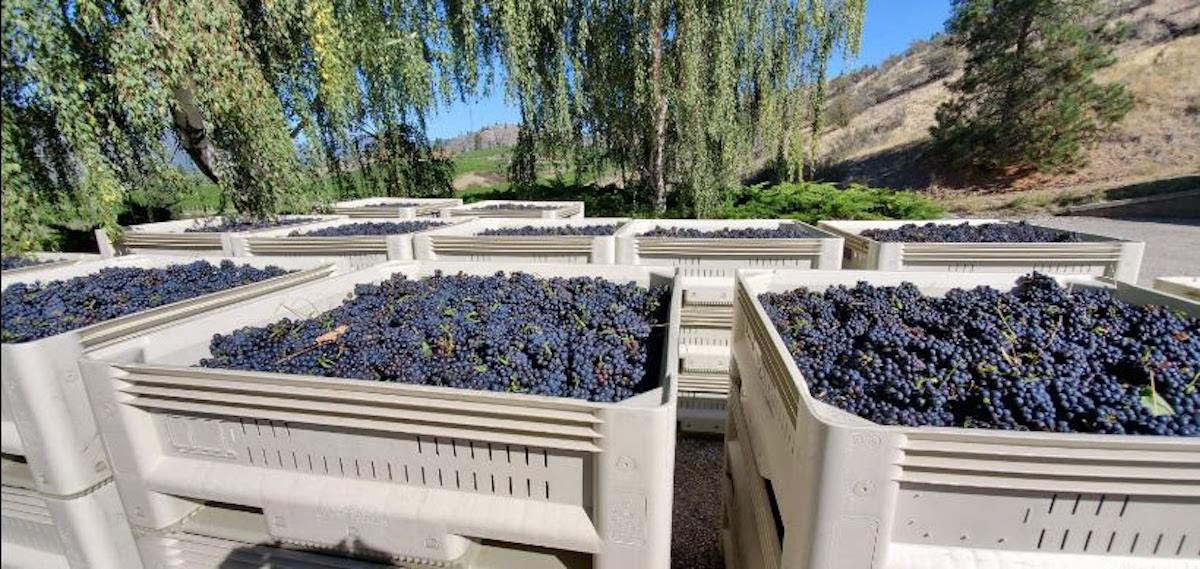 Provence Winemaker Series highlights Blue Mountain single-vineyard Pinot Noirs