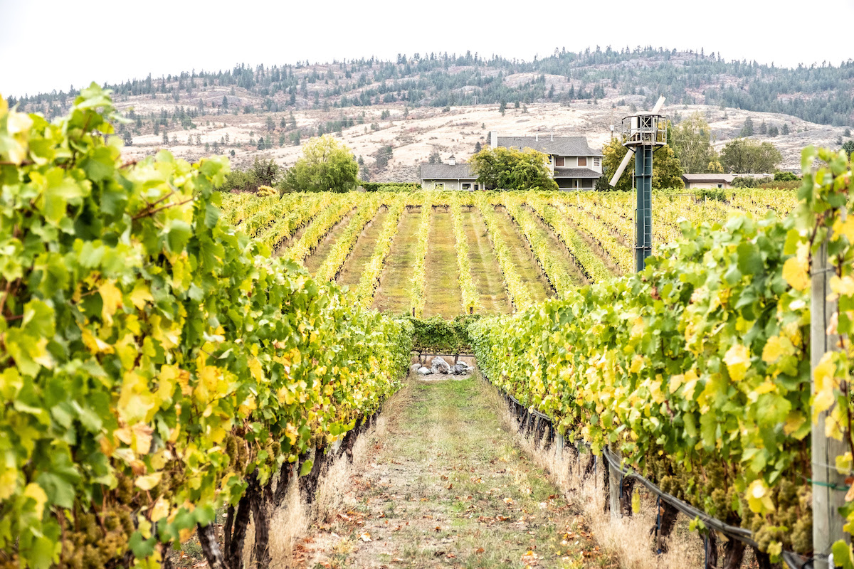 Summer is Here in Oliver Osoyoos Wine Country
