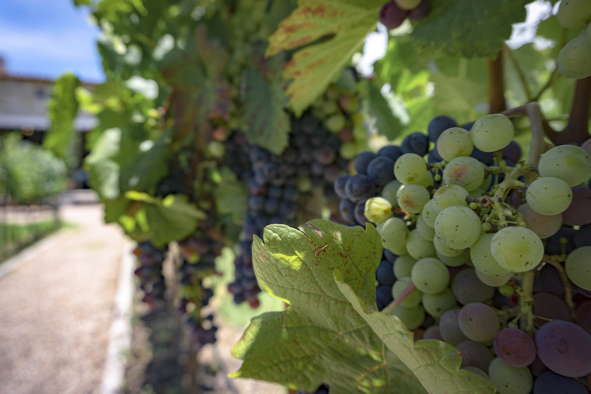 San Miguel de Allende's Burgeoning Wine Country